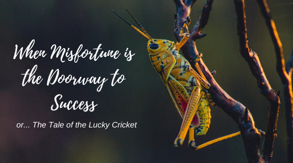 When Misfortune is the Doorway to Success (or the Tale of the Lucky Cricket)